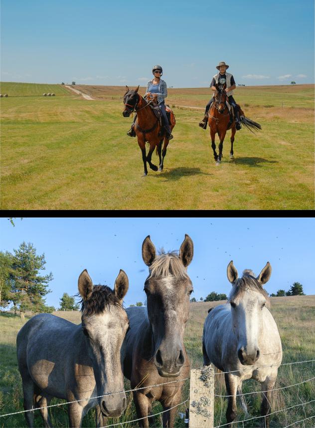 HEBERGEMENT-chevaux